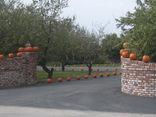 pumpkin-trail.jpg