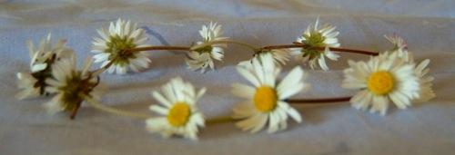 daisy-chain.jpg