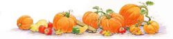 pumpkinpatch_250.jpg